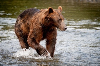 Bear and wildlife viewing by float plane in Southeast Alaska