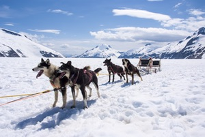 Dogsled ready to go! Juneau Alaska Adventure